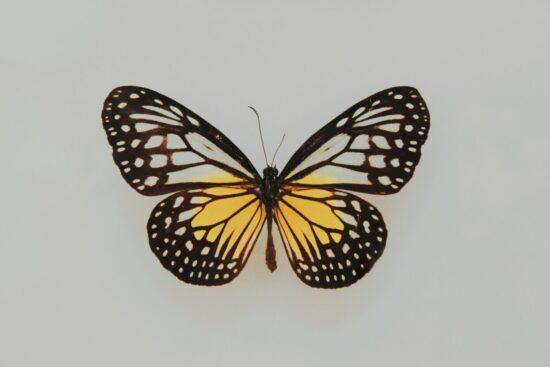 Forschungsprojekt »Lebensqualität für Schmetterlingskinder« vergibt Abschlussarbeiten